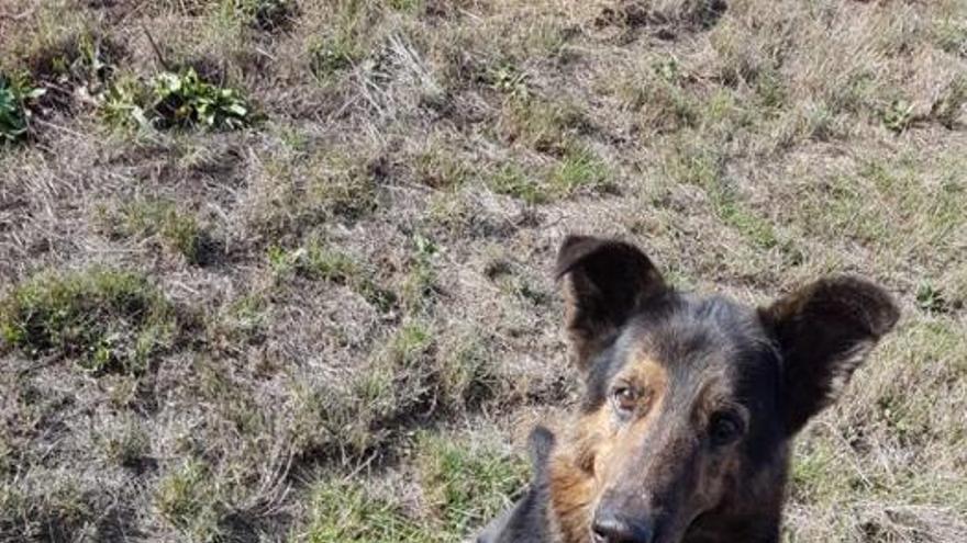 9 perros de Peludos sen fogar necesitan tu ayuda