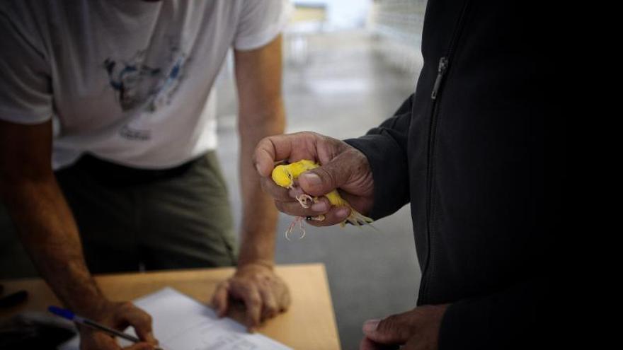 El Recinto Ferial se prepara para el Campeonato Ornitológico de Canarias