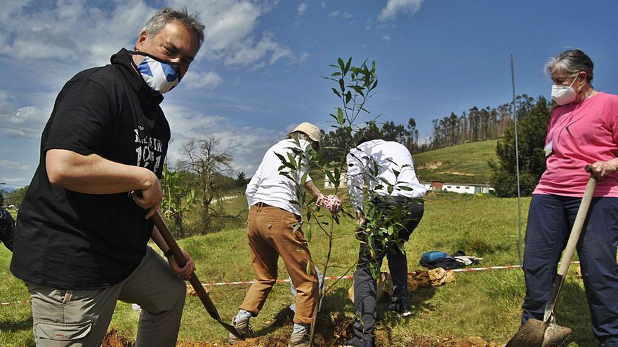 """Las casas compartidas de Llanera echan raíces con su primer árbol: """"Es un proyecto ejemplar"""""""