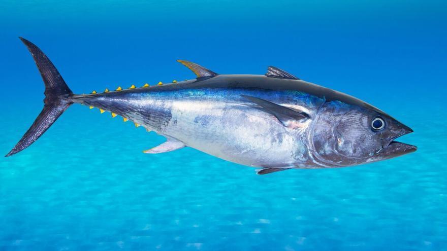 ¿Se está exagerando el peligro del mercurio en el pescado?