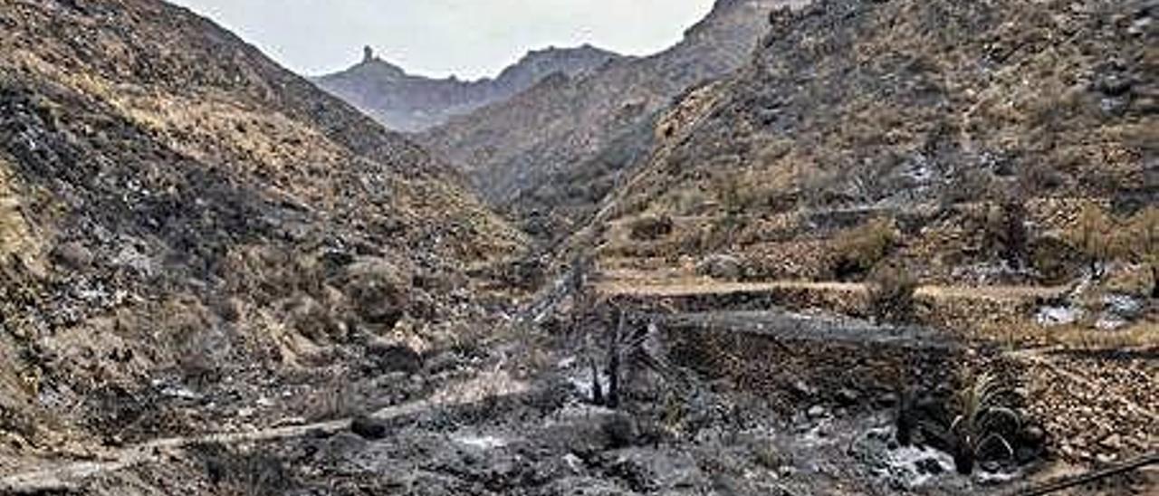 Imagen del barranco de Baylico, afectado por el paso del fuego, con el Roque Nublo al fondo.