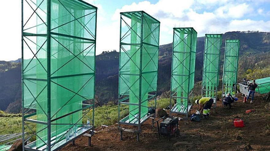 Captanieblas para reforestar Valleseco con laurisilva