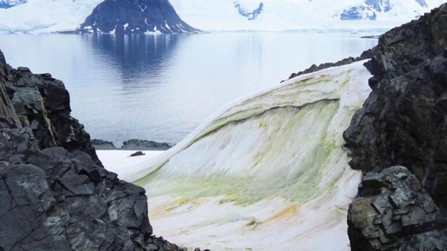 La costa de la Antártida se vuelve verde por el calor