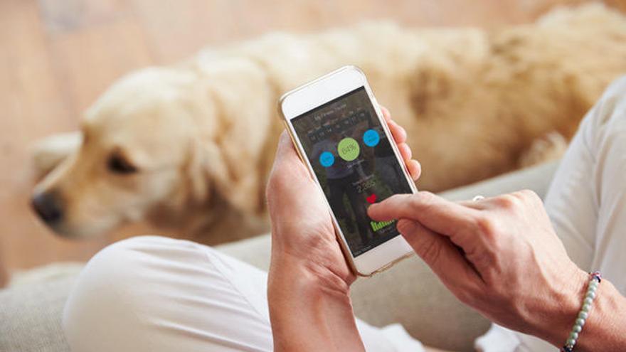 Las mejores aplicaciones móviles para los dueños de perros