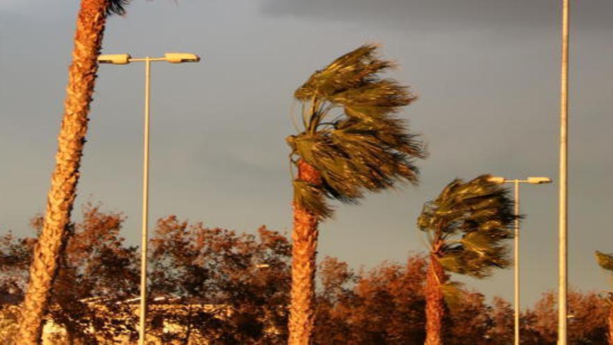 Alerta per fort vent demà al Pirineu, Prepirineu i als dos extrems del país