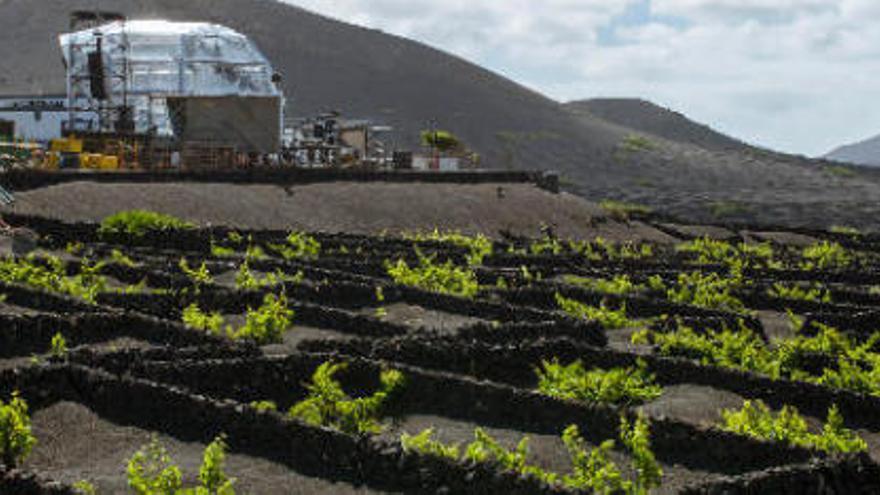 Las diez denominaciones de origen de los vinos del Archipiélago