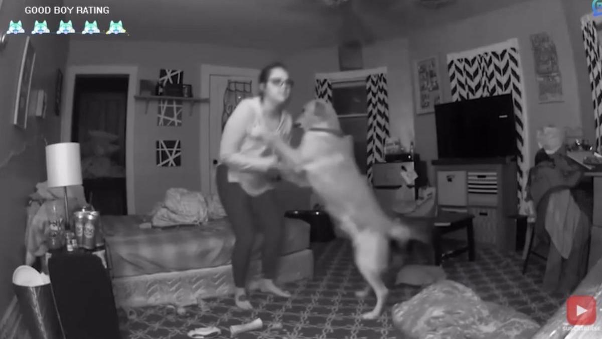 Un perro salvando la vida de su dueño.