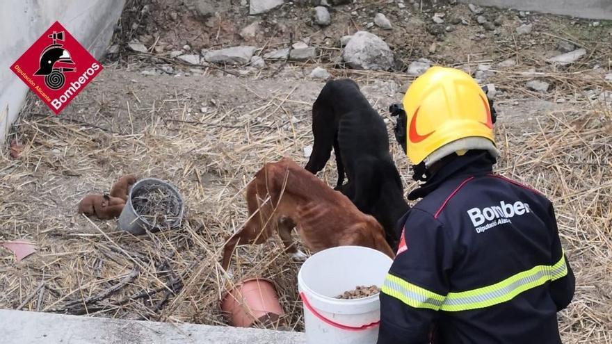 Rescatan a varios perros y sus cachorros atrapados varios días en Cocentaina