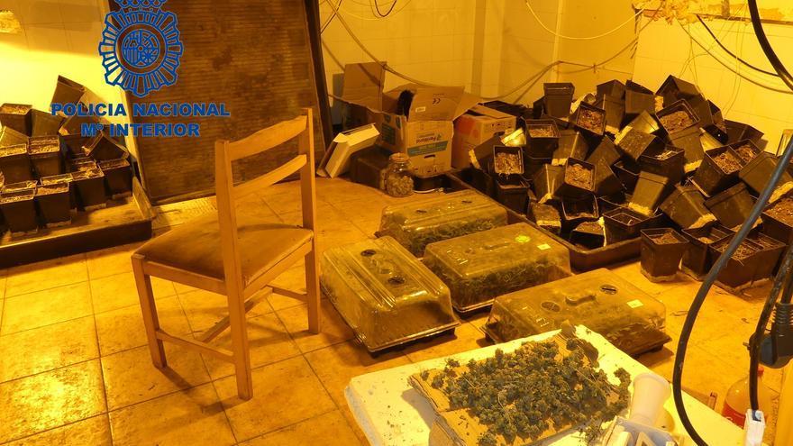 Dos detenidos por cultivar marihuana en una casa okupada en Manises