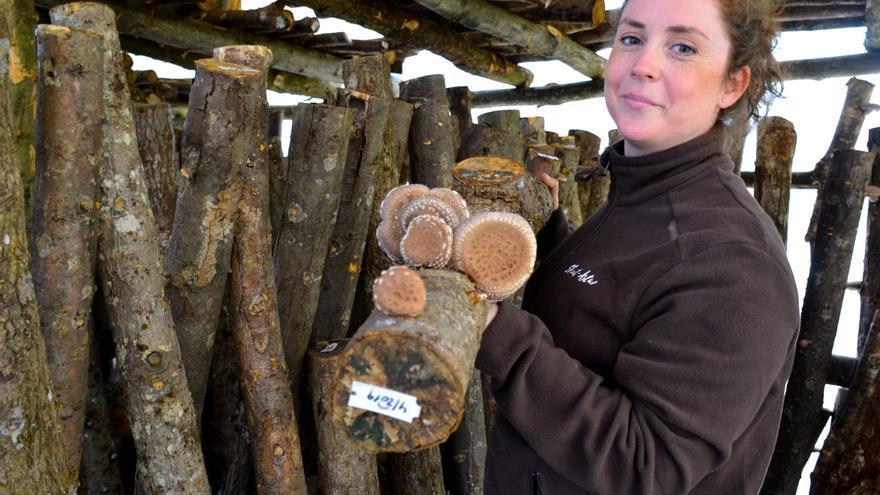 María Monge, una sevillana que ve futuro en el bosque asturiano con el cultivo de setas de la especie shiitake