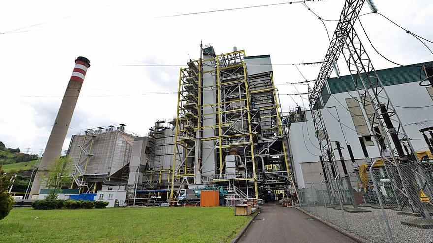 Los proyectos que cambian el carbón por la biomasa: Las dudas de una Pereda verde
