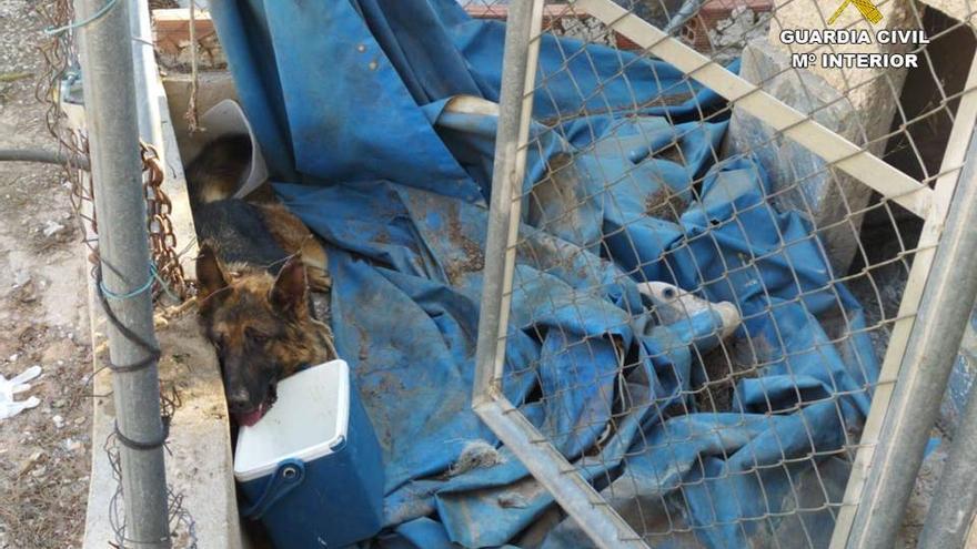 Liberado un perro atrapado en una trampa ilegal en Pinoso