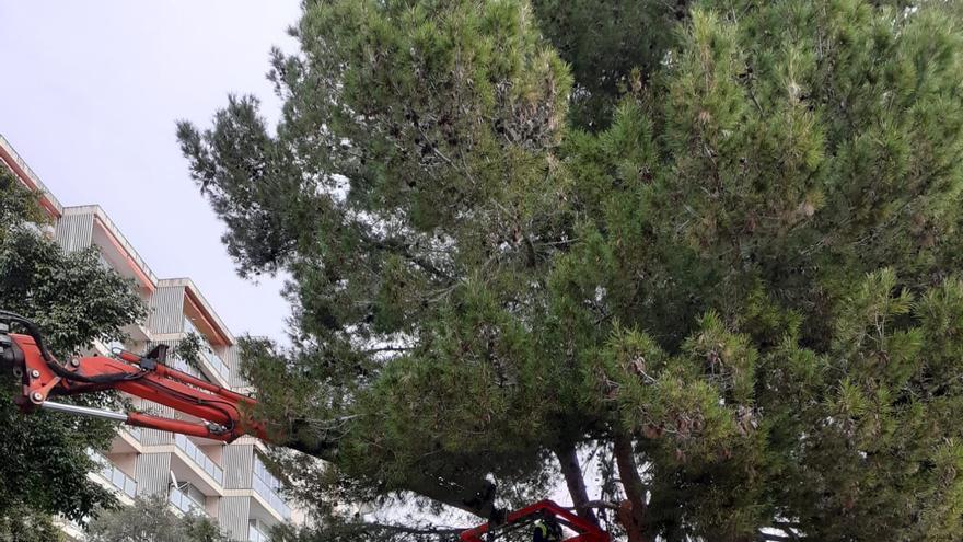 El parque de sa Quarentena sigue cerrado por los daños causado por la borrasca Hortense