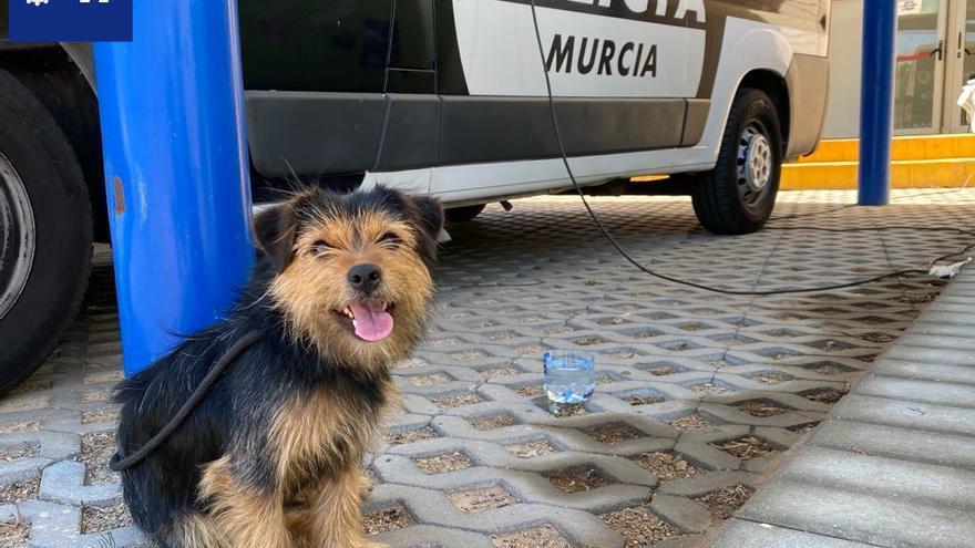 Buscan al dueño de un perro perdido en La Alberca
