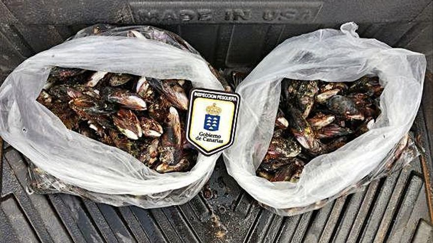Incautan marisco ilegal en Fuerteventura