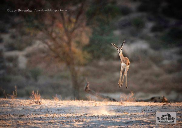 fotos-divertidas-animales-999999.jpg