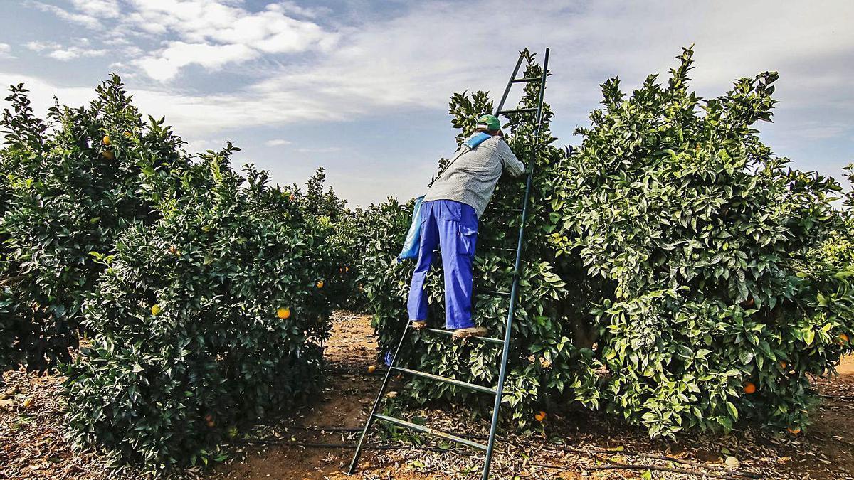 En España se han analizado los cultivos hortícolas y de naranjas.