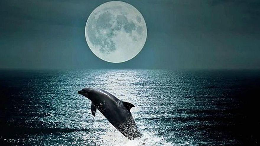 Hacer daño a un delfín trae mala suerte