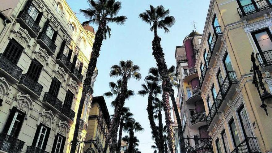 Una palmera ungida por el sol en Puerta del Mar