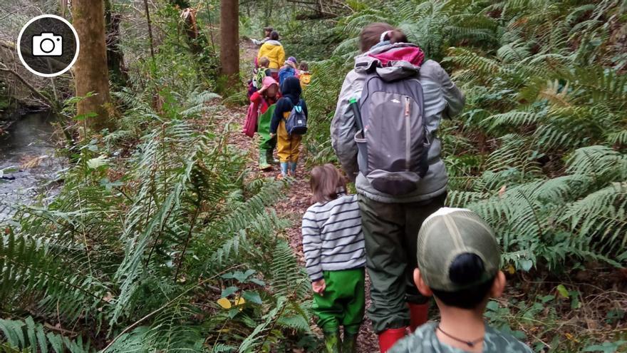 La escuela se echa al bosque