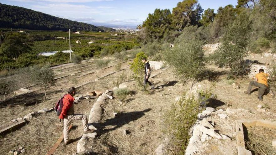 Una estación polinizadora garantizará flores durante todo el año en La Casella