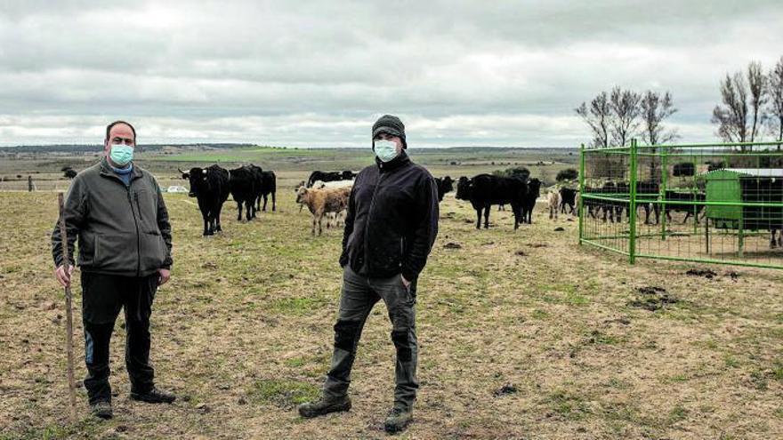 Almeida de Sayago: el desafío de apostar por el pueblo y el ganado