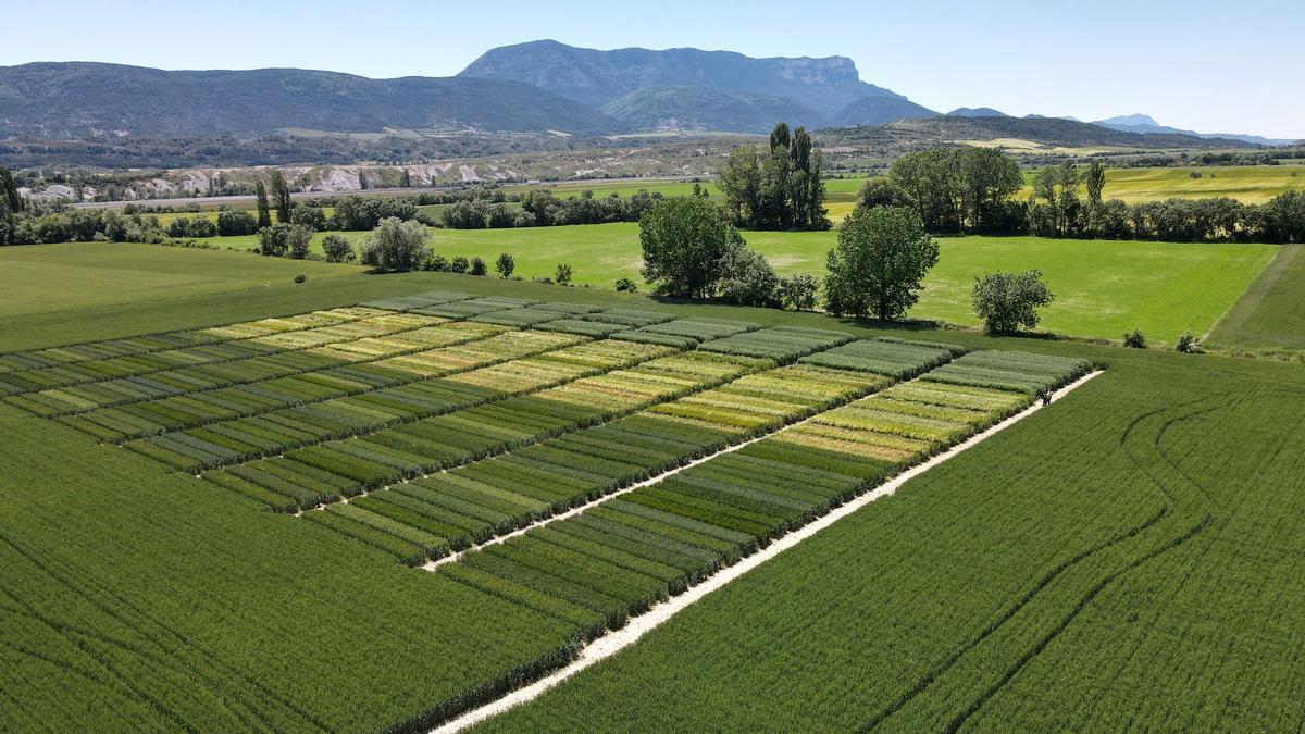 Campos de cultivo en la cooperativa