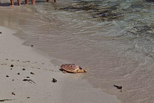 Mallorcas Schildkröten