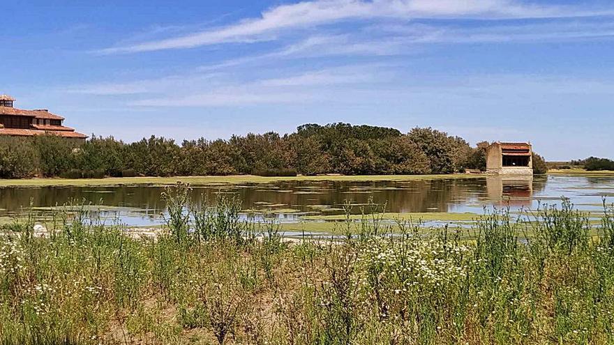 """Abiertas las inscripciones para el """"natureWatch"""" en las Lagunas de Villafáfila"""
