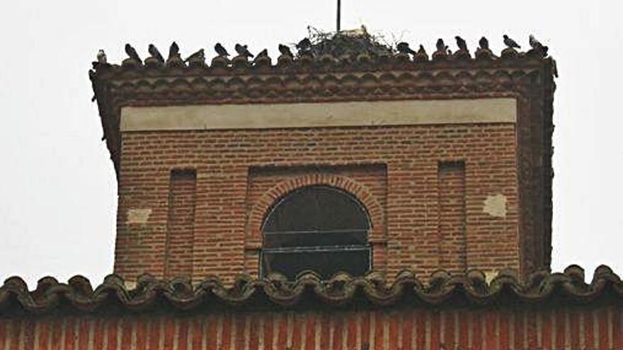 El Ayuntamiento de Toro implanta jaulas en edificios para el control poblacional de las palomas