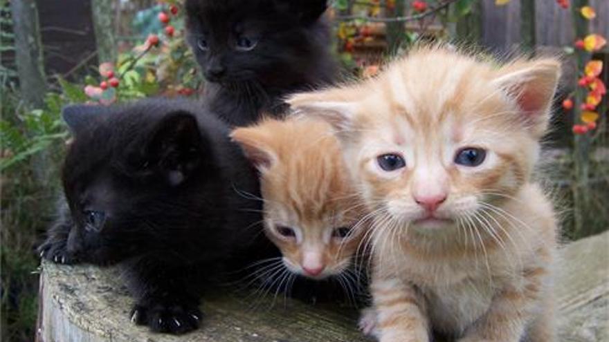 Castelló, ejemplo en la gestión de colonias felinas