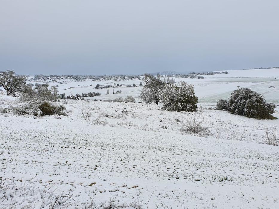 Nieve en Venialbo
