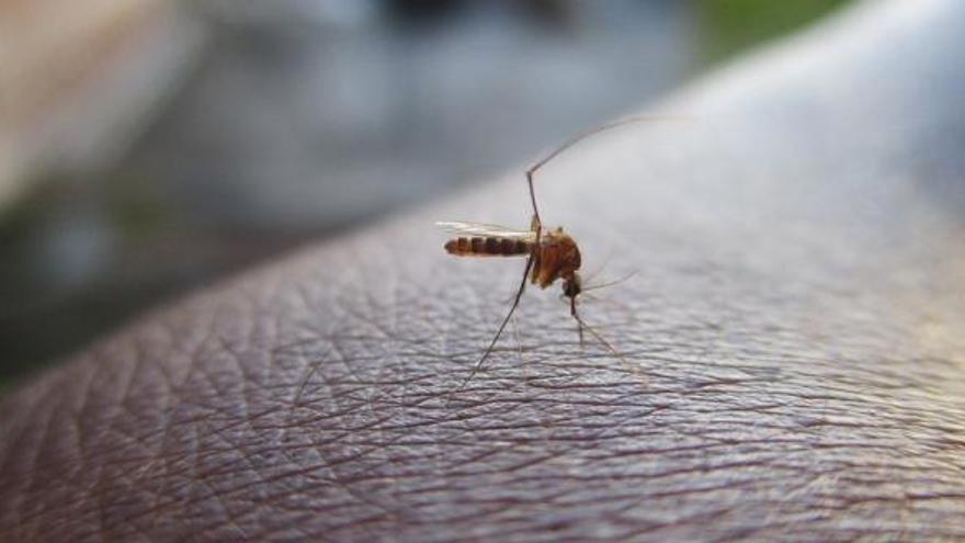 El truc definitiu per lliurar-te de mosques i mosquits a casa aquest estiu