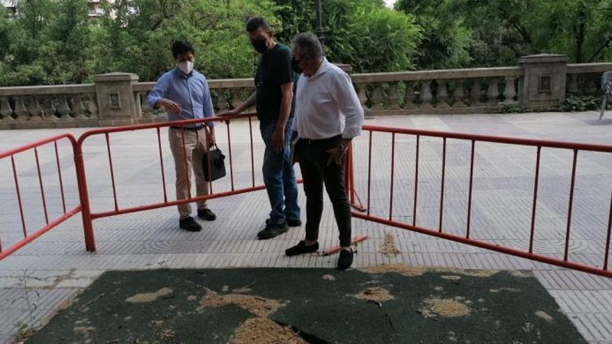 Xàtiva prueba una estructura de lamas para replantar los plataneros abatidos