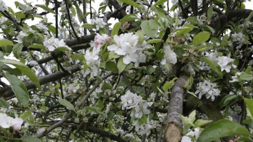 Cajas nido para aves insectívoras, el remedio contra las plagas del manzano
