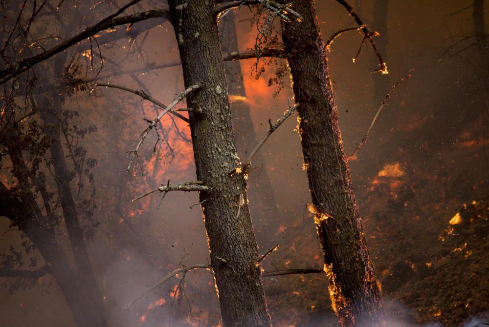 Los servicios de emergencia intentan sofocar las llamas por tierra y por aire.