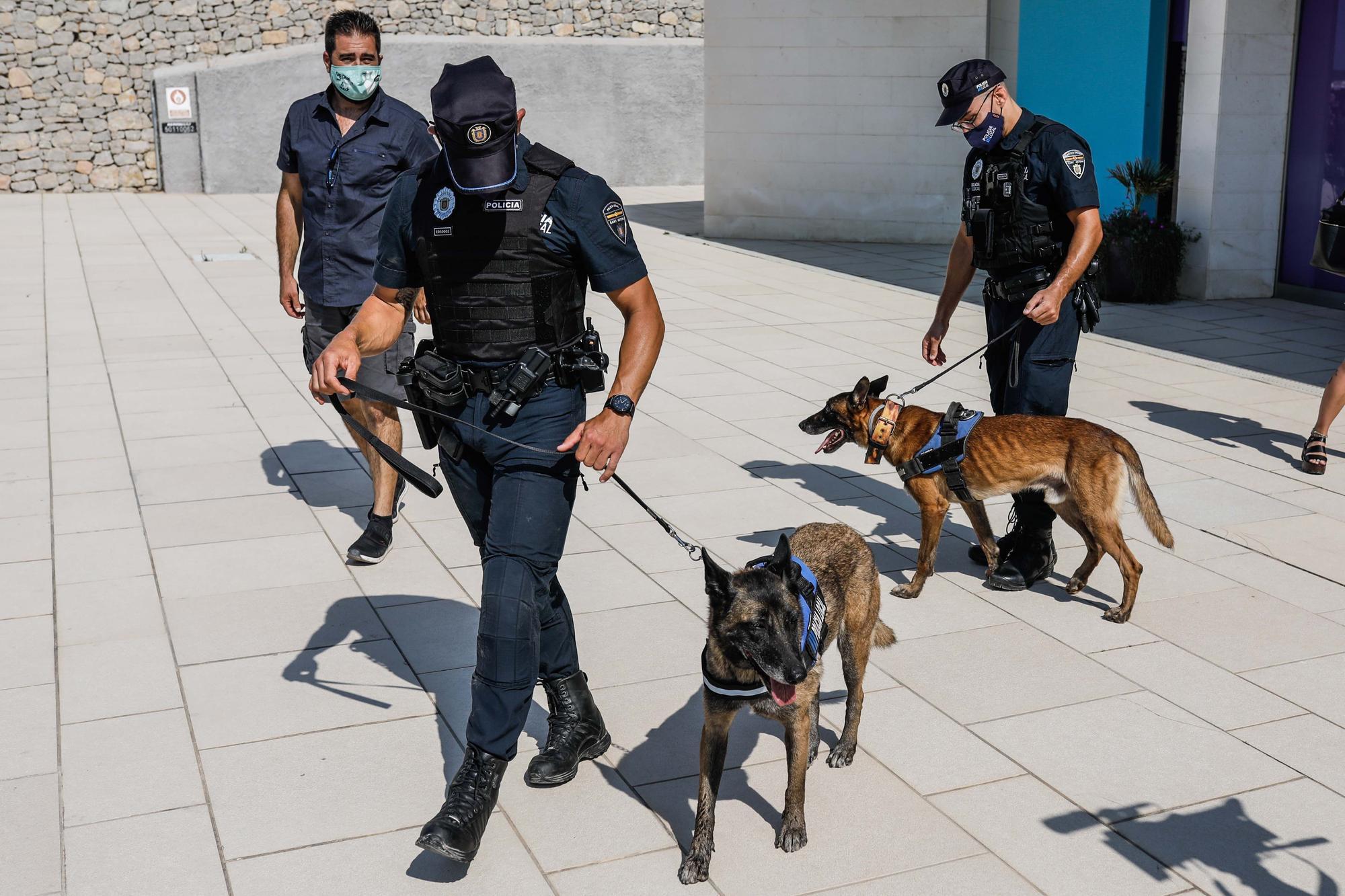 Kata y Mustang, los dos nuevos agentes caninos de Sant Antoni
