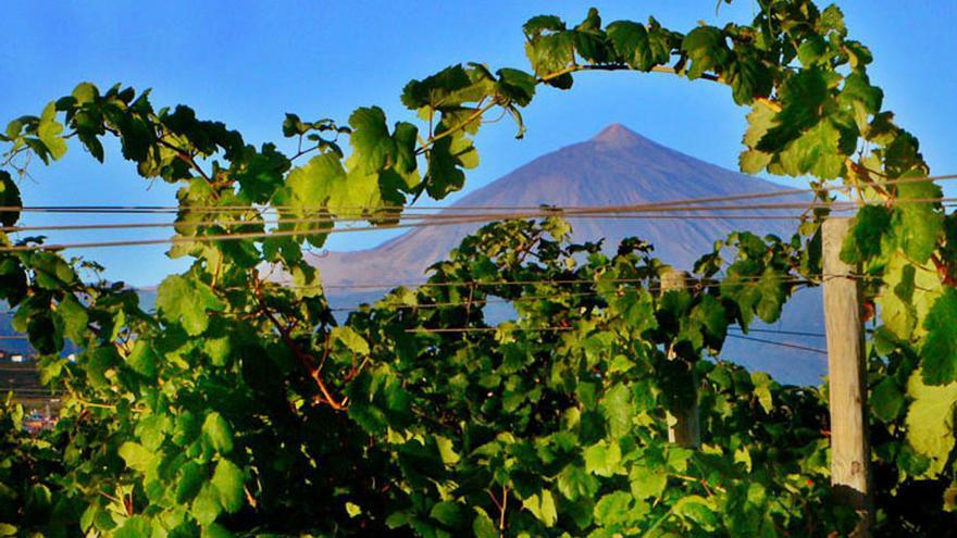 Tenerife, tierra de vinos únicos