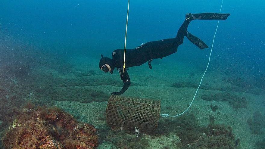 La UdG estudia com millorar  la visibilitat del fons marí