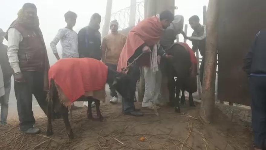Nepal realiza la mayor matanza ritual de animales del mundo