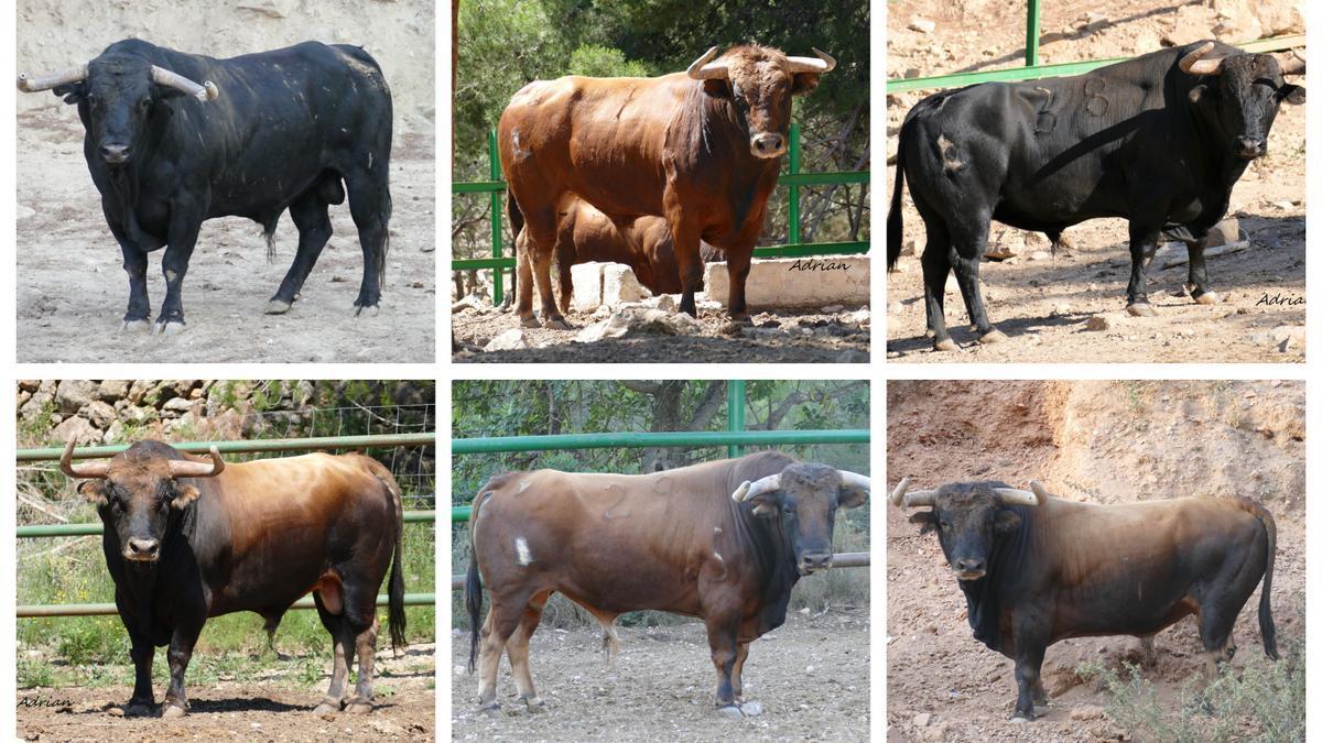 Los seis toros de Daniel Ramos para la Fira d'Onda.