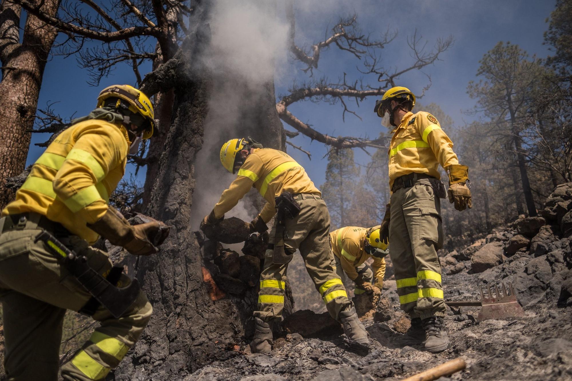 Dispositivo especial del Cabildo de Tenerife en el incendio de Arico
