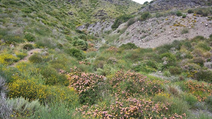 Cerco a la flora exótica invasora en los parques de Sierra Espuña y Calblanque