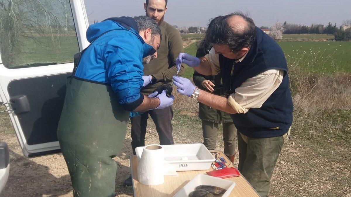 Conjura para salvar a la almeja de río, el molusco más amenazado de España
