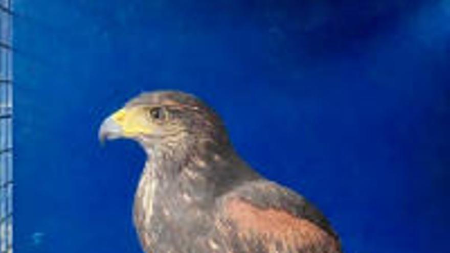 Rescatan a una pitón real y a otros 16 animales exóticos en el primer semestre