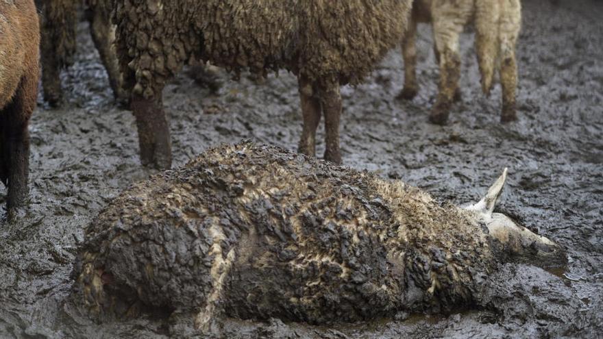 Los dueños de una granja de Tarragona, condenados a un año de cárcel por maltrato animal
