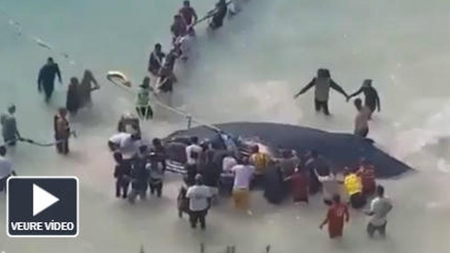L'angoixant rescat d'una balena en una platja de Brasil