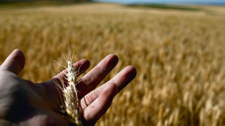 Agricultores y ganaderos de Zamora se movilizan este viernes en Valladolid por la PAC