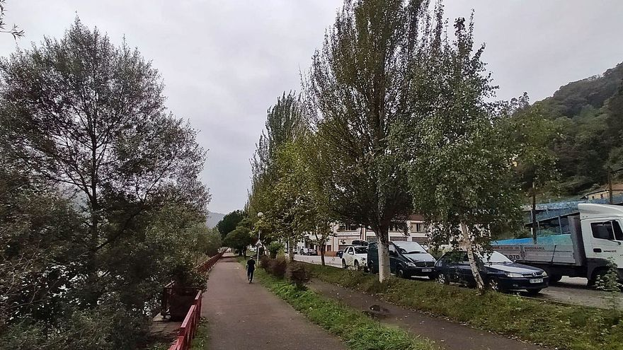 Gonzalín pide la tala de los grandes árboles que constriñen todo el largo del polígono
