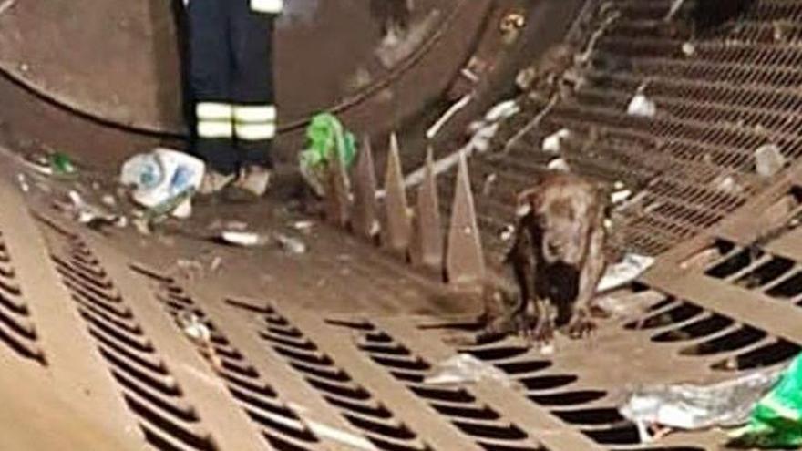 Un grup d'operaris salva un gos dels ganivets d'una planta de residus